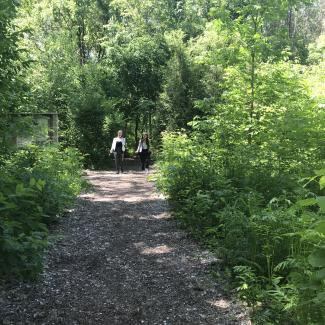 Parc Marcel‐Laurin, sentier existant à travers la zone boisée