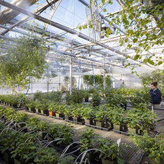 Contemporary View of a portion of production greenhouses containing caterpillar rearing facilities